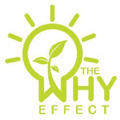 The Why Effect